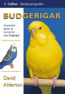 Budgerigar - David Alderton