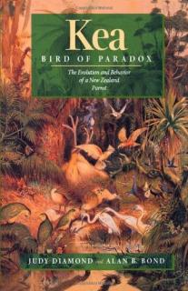 Kea, Bird of Paradox: Evolution Behavior New Zealand Parrot  - Judy Diamond